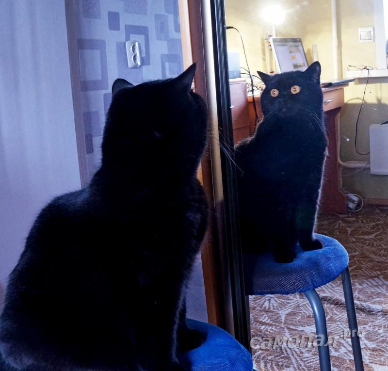 Кот следит за процессом