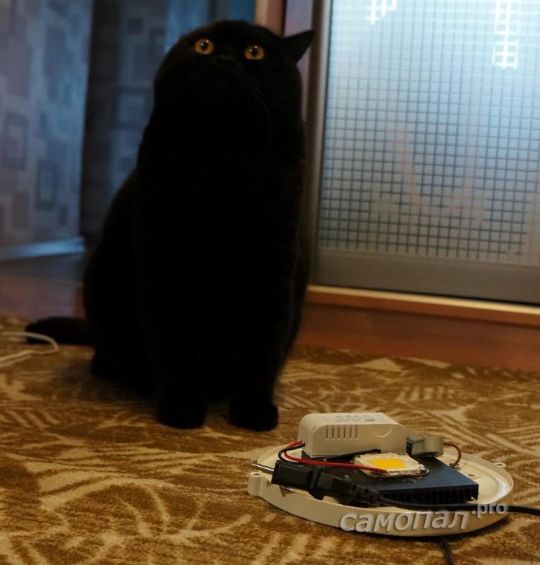 Кот смотрит куда вешать светильник