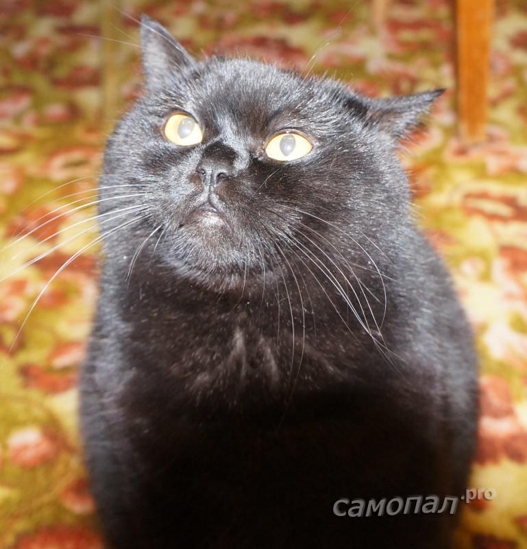 На кота выключатель не реагирует