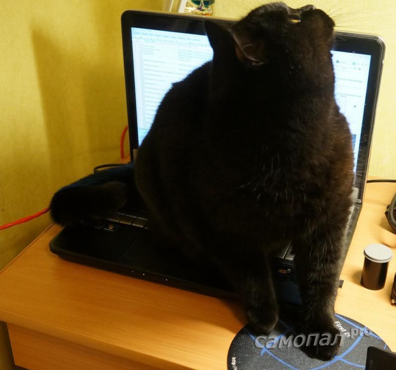 Кот смотрит на светильник